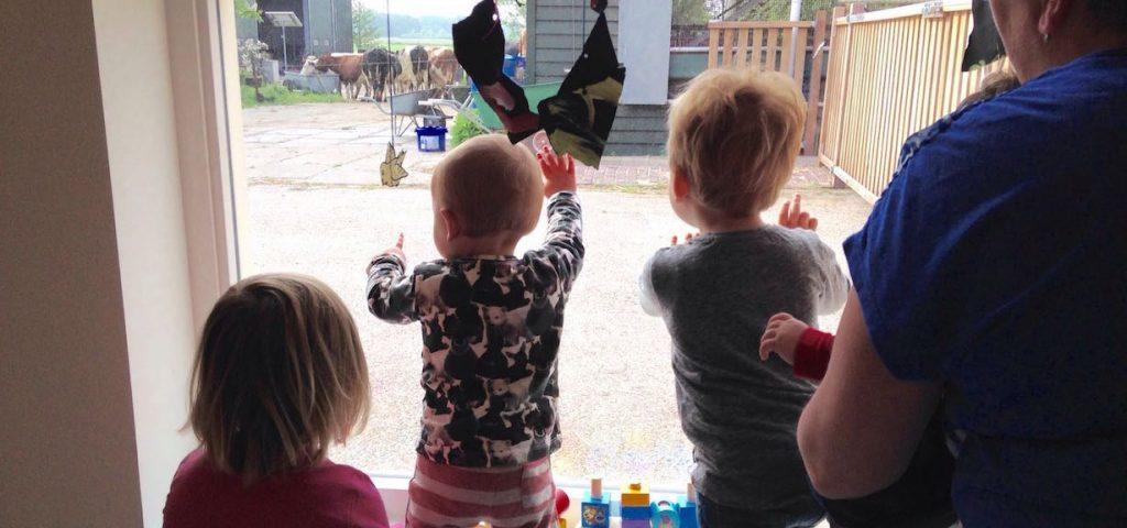 Kinderen kunnen vanuit kdv de koeien binnen zien