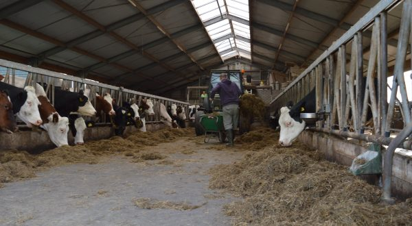 Zorgboerderij